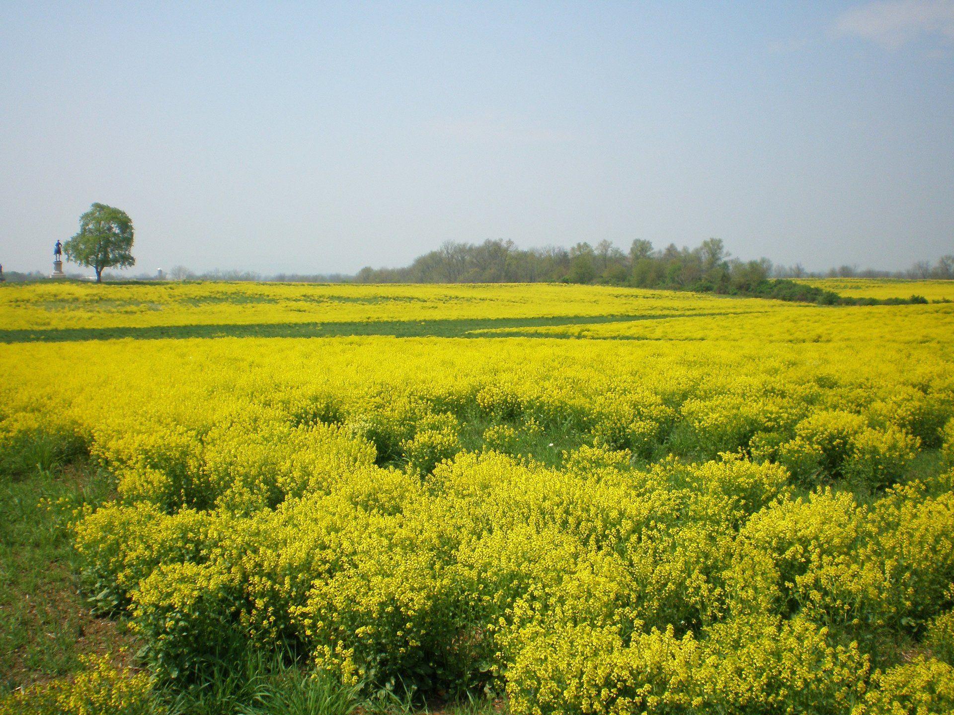 Spring bloom in Gettysburg